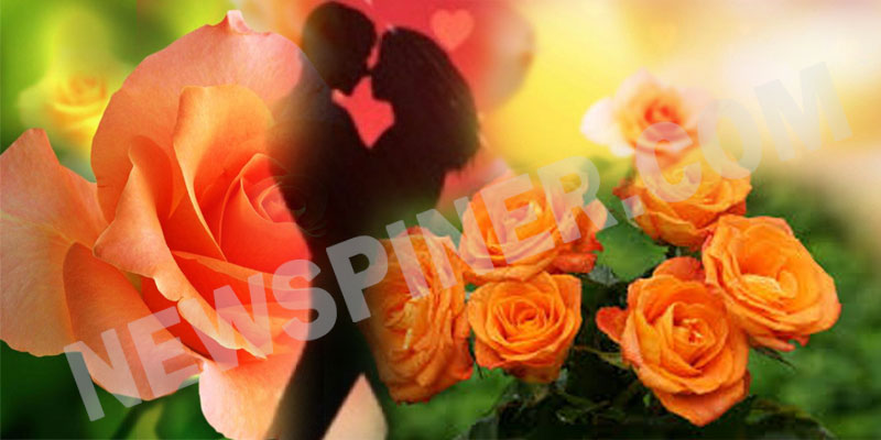 Orange-rose-day