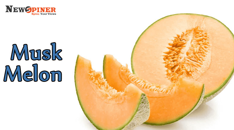 Musk Melon - Summer Fruits in India