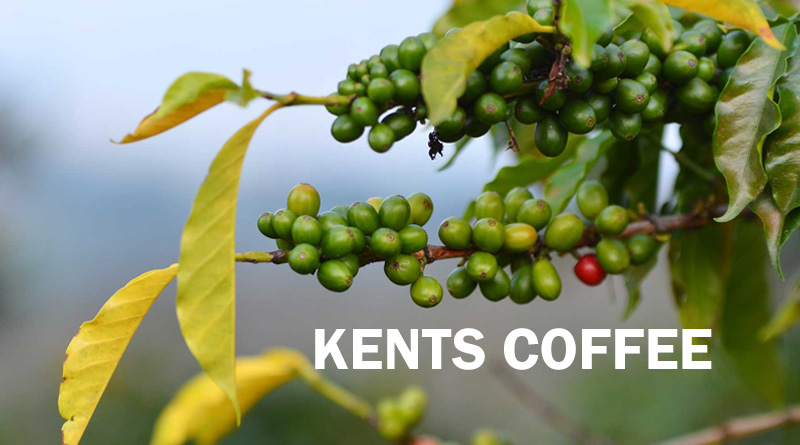 Kents Coffee - Types of Coffee in India