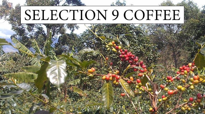 Selection 9 Coffee