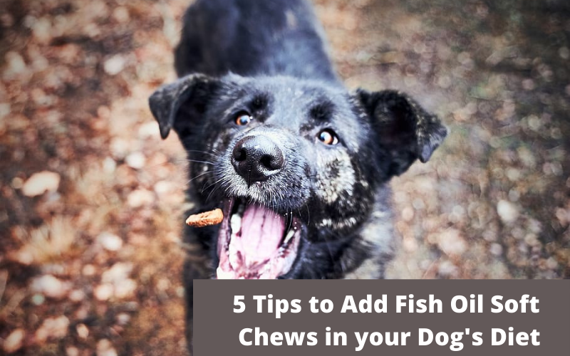 5 Tips to Add Fish Oil Soft Chews in your Dog's Diet